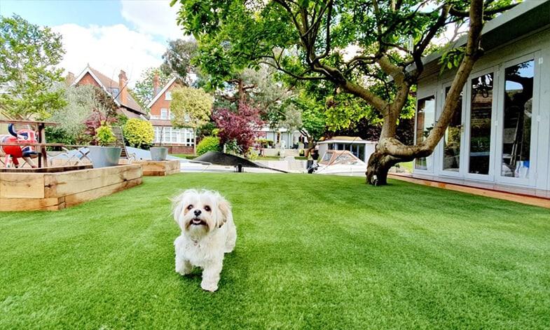 Artificial Grass Dog Easigrass JHB North